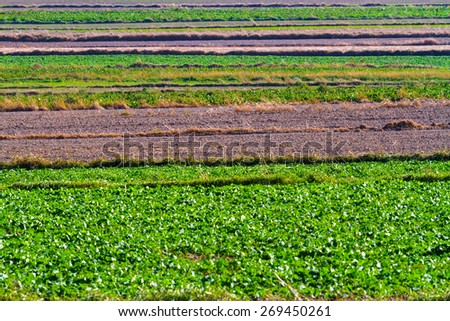 Spring agricultural fields with green plants and fallow plowed soil. Background. - stock photo