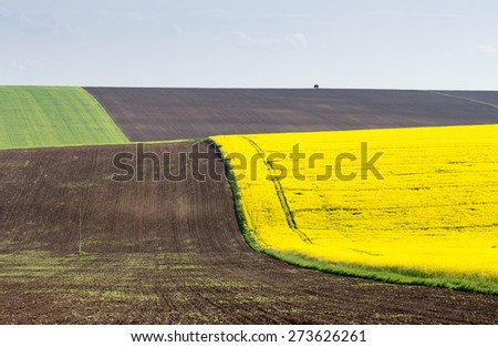 Spring agricultural land plowing, sowing, wheat and rape blue sky - stock photo