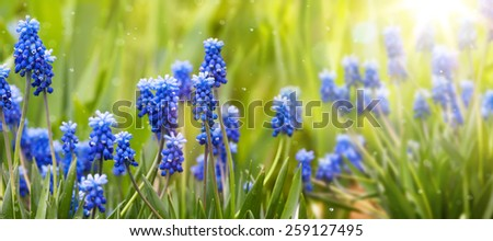 Spring and easter background with spring flowers - stock photo