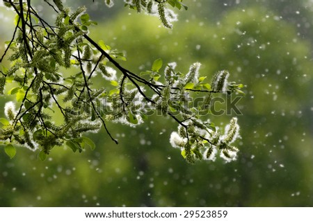 Spring and Pollen - stock photo