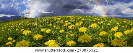 Spring and summer flowers-dandelions under a clear sky with bright clean clouds pleases viewer saturated colors and the freshness of a new day. After the storm and rain especially bright foliage color - stock photo