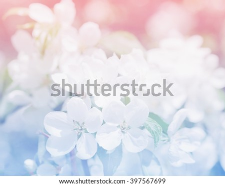 Spring apple blossom, flowers over a light pink and blue background - stock photo