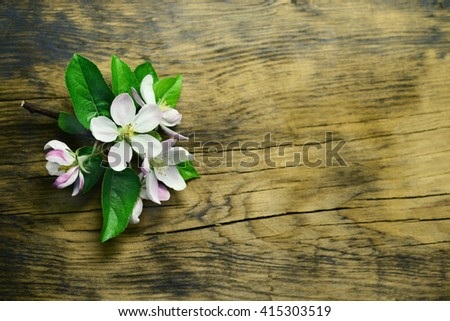 spring apple blossom on the old board