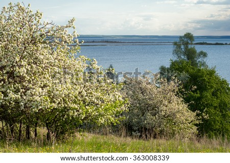 Spring apple blossom river sunset. sunset on a meadow with blooming trees spring scenery.  - stock photo