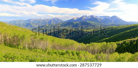 Spring aspen panorama in the Wasatch Mountains, Utah, USA. - stock photo