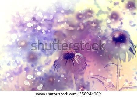 Spring backgfround with blooming chamomile flowers in the nature, meadow of flowers, spring floral landscape. - stock photo