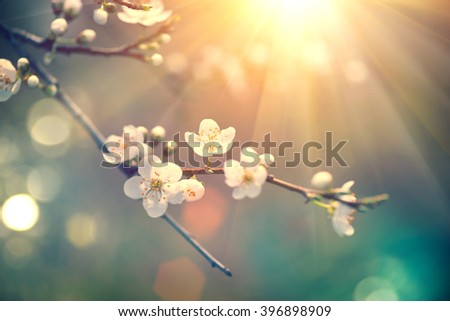 Spring background art with beauty blossom. Beautiful nature scene with blooming tree and sun flare. Sunny day. Spring flowers. Beautiful Orchard. Abstract blurred background. Springtime - stock photo