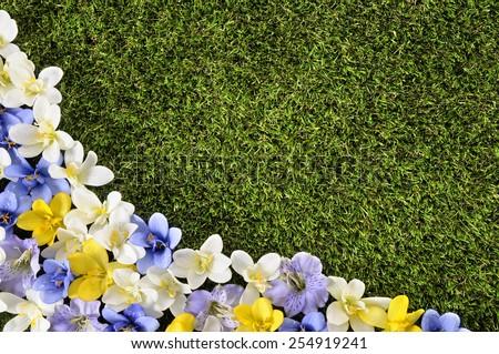 Spring background flower border. - stock photo