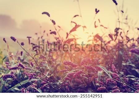 spring background/ Morning Fresh Landscape with sunrise/ spring or summer nature background. - stock photo