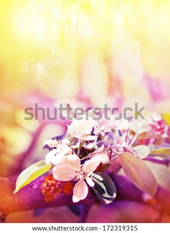 Spring background with a flowers/ colorful floral card /Blooming trees Flowers at Spring Time