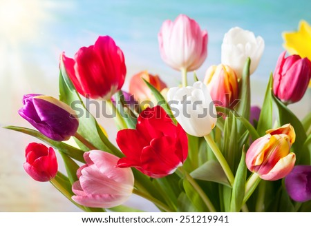 Spring background with colorful tulips - stock photo