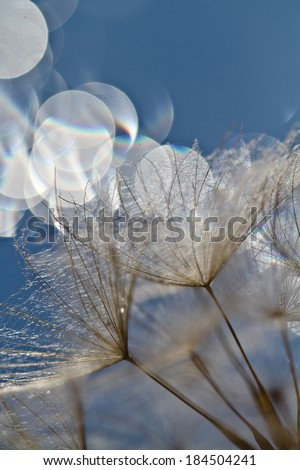 spring background with dandelions with light bokeh - stock photo