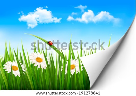 Spring background with flowers, grass and a ladybug. Raster version - stock photo