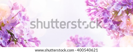 Spring  background with fresh spring flowers - stock photo