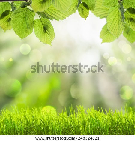 Spring background with green grass and leaves over defocused light - stock photo