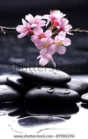 Spring background with plum flowers on pebble - stock photo