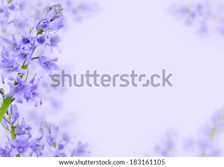 Spring background with purple hyacinth flowers - stock photo