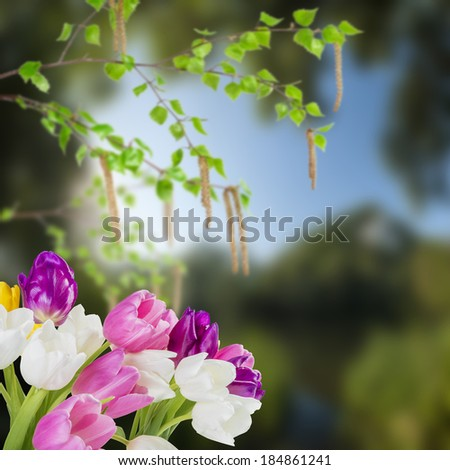 Spring background with tulip flowers and birch branches