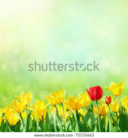 Spring background with tulips - stock photo