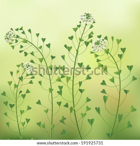 Spring background with weed flowers. - stock photo
