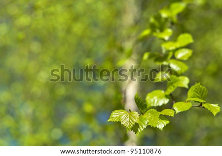 Spring background with young birch leaves. - stock photo