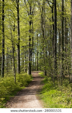 Spring beech forest in Denmark a sunny day - stock photo
