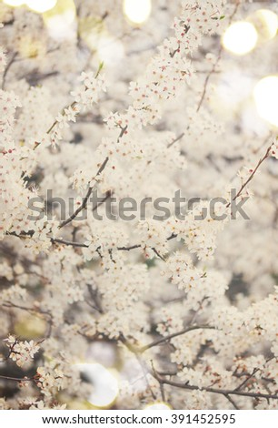 Spring bloom - tree with white blooming  flowers, shallow depth of field, retro toned - stock photo