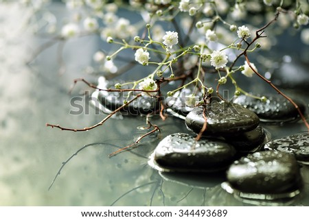 Spring blooming branch under stones in water, spa spring concept, stylized photo - stock photo
