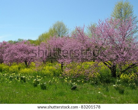 Spring blooming in Tennessee - stock photo