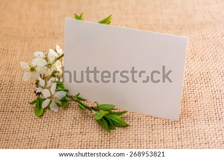 Spring blooming plum flowers. Greeting card background - stock photo
