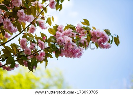 Spring blooming tree branch - stock photo
