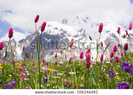 spring blossom at the high caucasus mountains - Svaneti, Georgia - stock photo