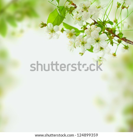 Spring blossom background - abstract floral border of green leaves and white flowers - stock photo