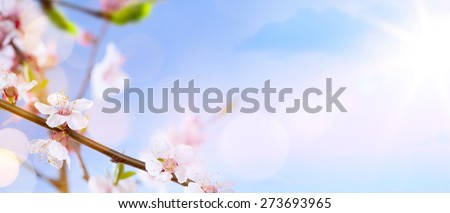 Spring blossom background. Beautiful nature scene with blooming tree and sun flare. Sunny day. Spring flowers. Beautiful Orchard. Abstract blurred background  - stock photo