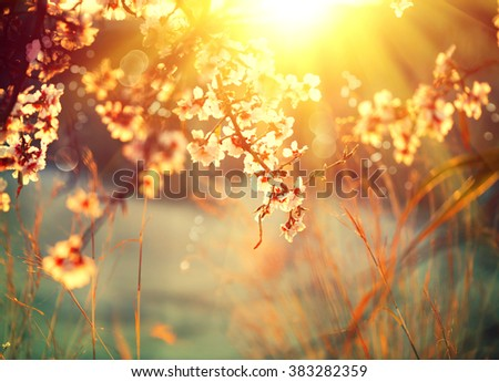 Spring blossom background. Beautiful nature scene with blooming tree and sun flare. Sunny day. Spring flowers. Beautiful Orchard. Abstract blurred background. Springtime - stock photo