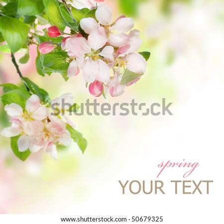 Spring Blossom border - stock photo