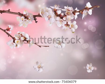 Spring Blossom Design - stock photo