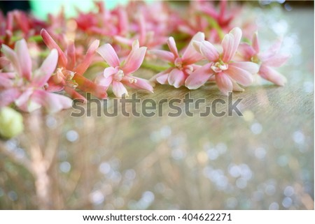 spring blossom flower background in soft blur vintage tone with space for text  - stock photo