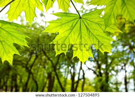 spring blossom on the trees young green leaves - stock photo