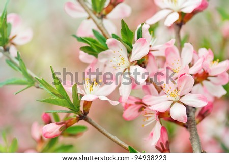 Spring  blossom. Outdoor. - stock photo