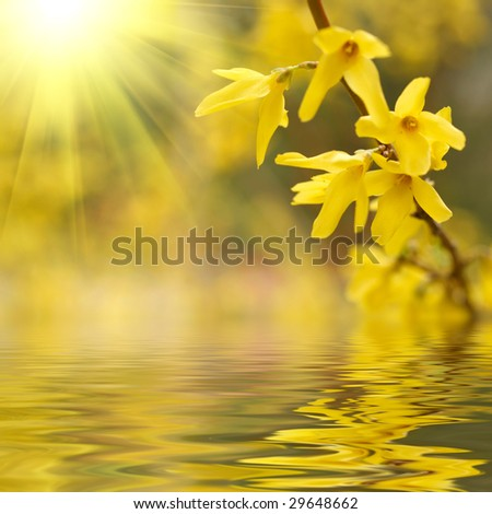 Spring blossom reflected in the water - stock photo
