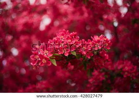 Spring blossom tree. Beautiful flowers. Nature background - stock photo