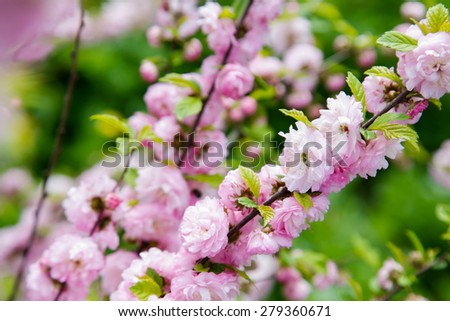 Spring blossoming branch - stock photo