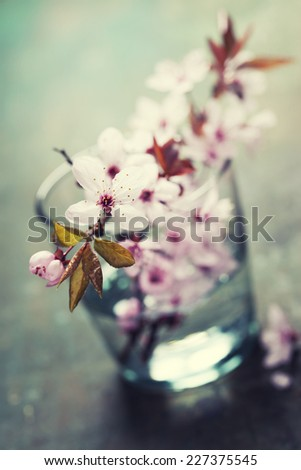 spring blossoms in glass vase on wooden surface - stock photo