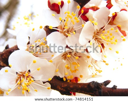 Spring blossoms on white background - stock photo