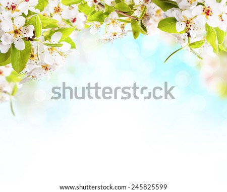 Spring blossoms on white background. Free space for text - stock photo