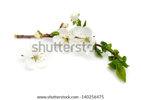 spring blossoms over white - stock photo