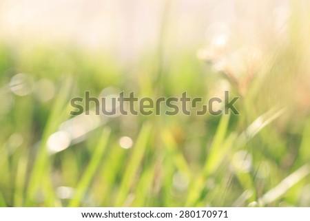 spring blur soft focus background - stock photo