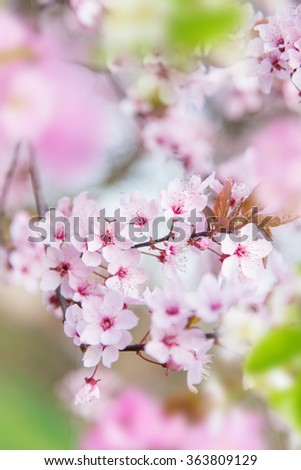 Spring border background with pink blossom, close-up. - stock photo