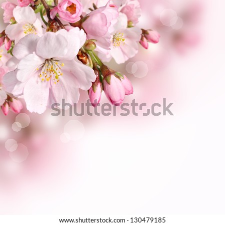 Spring border or background with pink blossom - stock photo